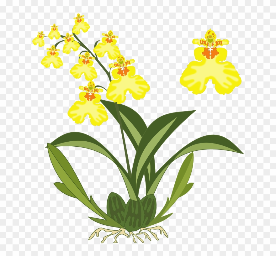 Yellow orchids clipart