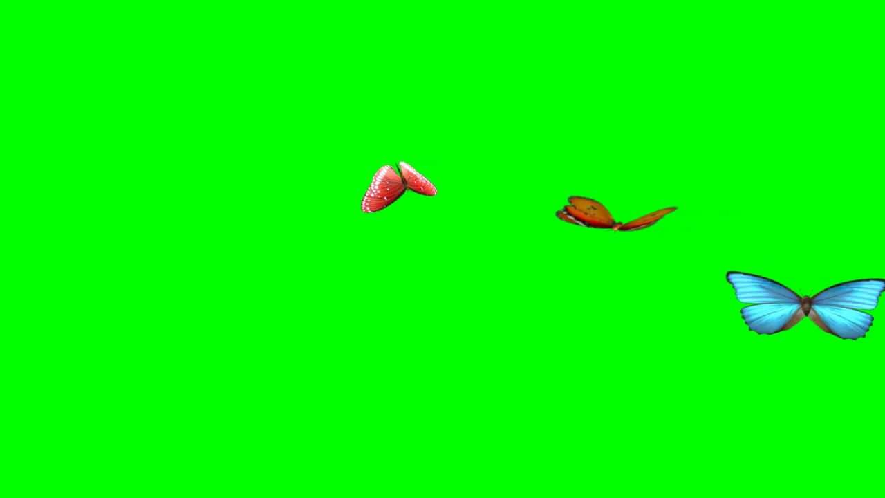 Green screen clipart video banner black and white stock Best Animated Butterflies, Flying Butterflies (Green Screen) HD banner black and white stock