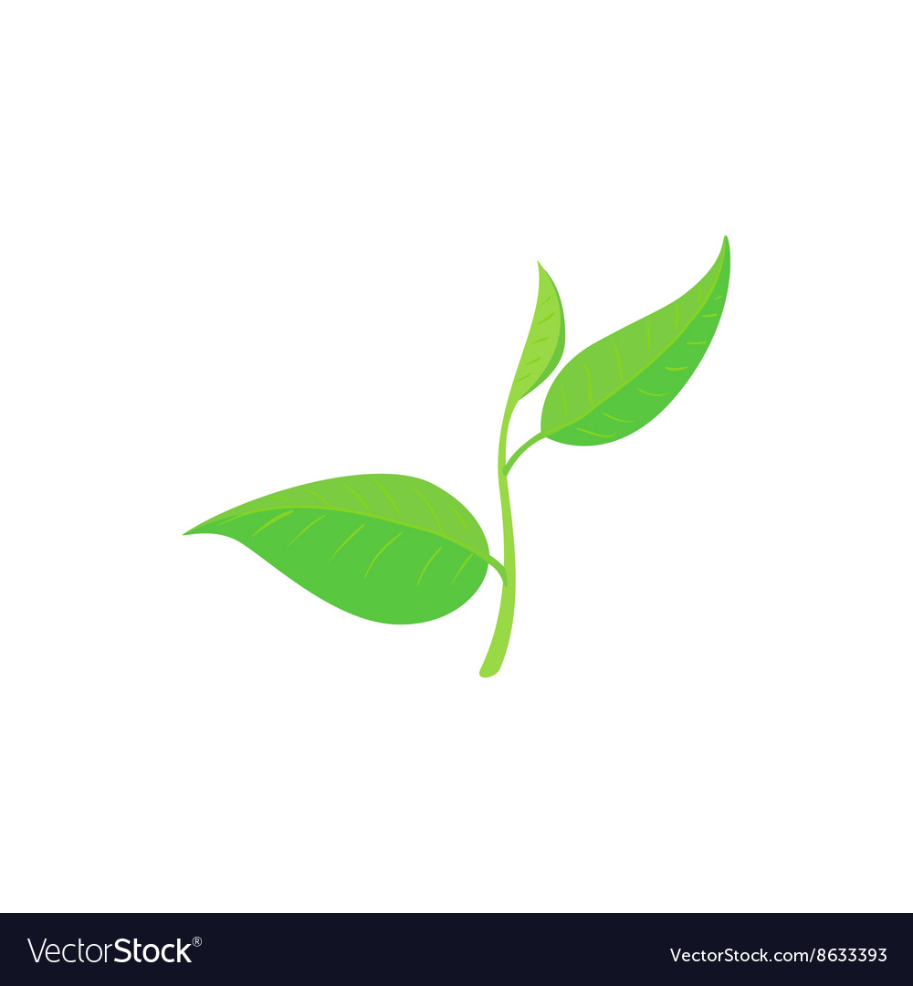 Green tea leaves clipart picture royalty free Green tea leaf icon cartoon style picture royalty free