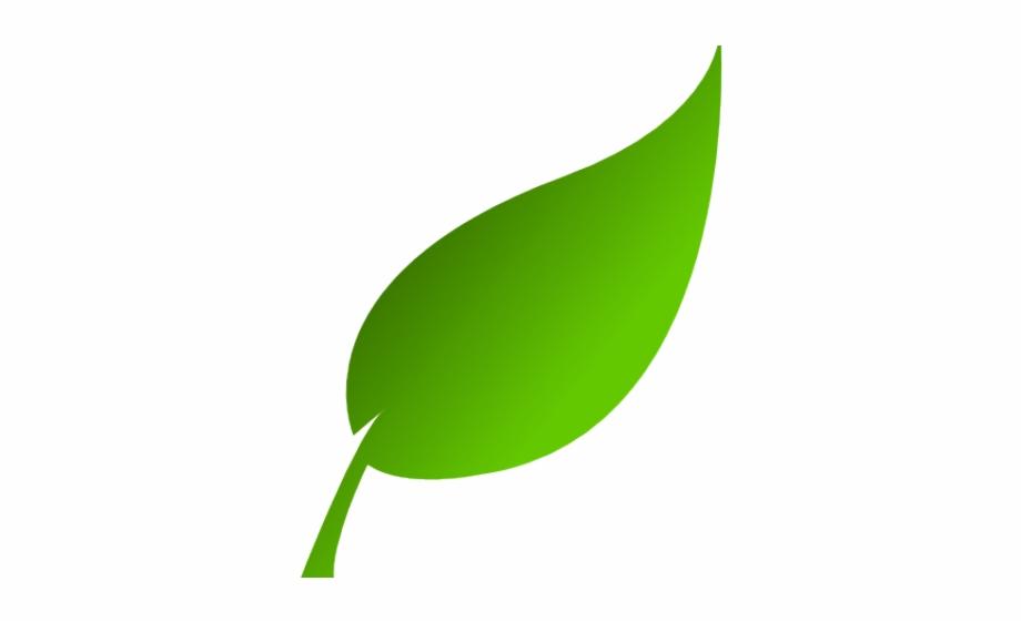 Green tea leaves clipart jpg freeuse Green Leaves Clipart Tea Leaf - Green Leaf Clipart, Transparent Png ... jpg freeuse