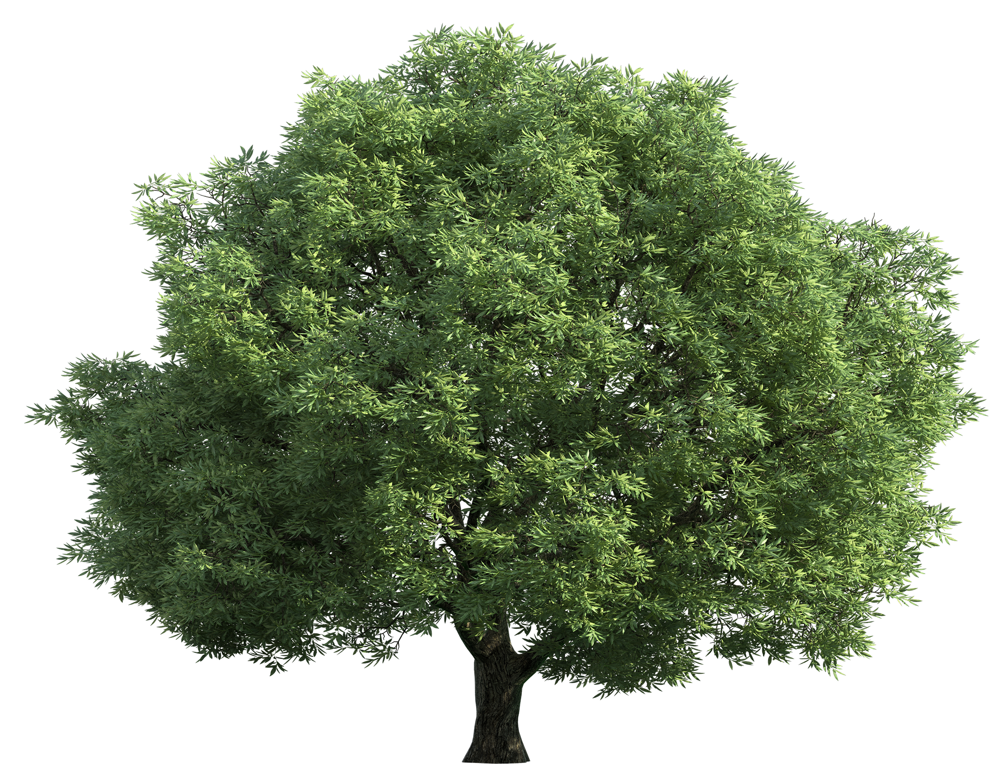 Realistic Green Tree PNG Clip Art - Best WEB Clipart royalty free stock
