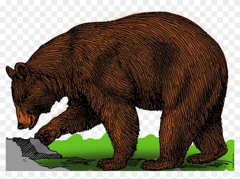 Grizzly bear clipart images svg transparent download Grizzly Bear Clipart Public Domain - Bear Drawing With Colour, HD ... svg transparent download