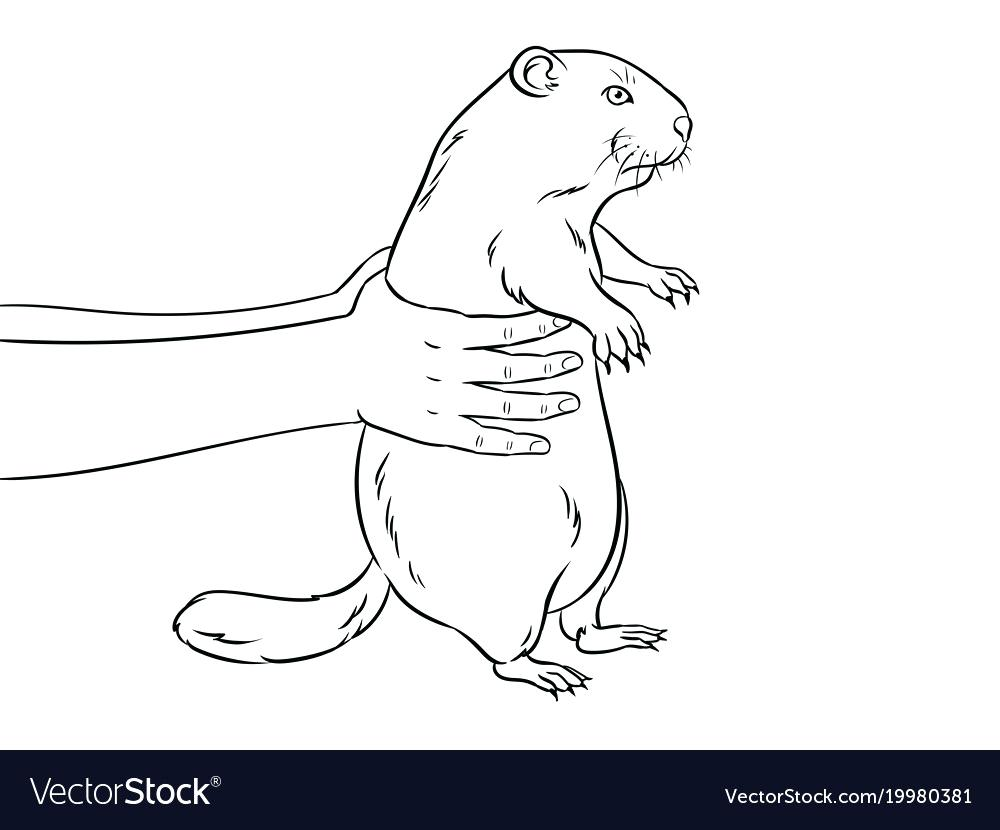 Groundhog black and white clipart svg library stock Groundhog Black And White Groundhog In Hands Coloring Book Vector ... svg library stock