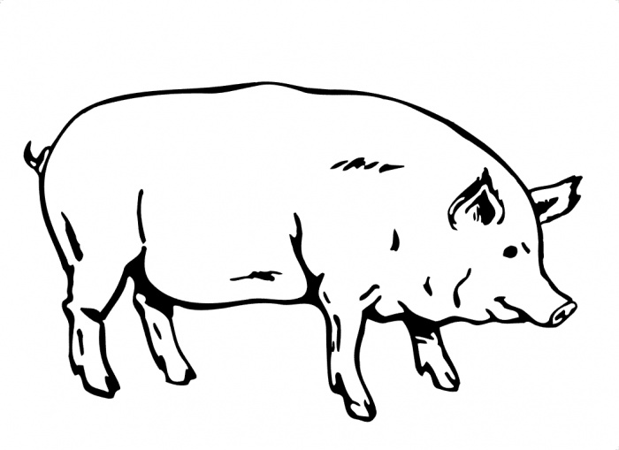 Group of pigs clipart black and white picture royalty free stock Free Pig Line Art, Download Free Clip Art, Free Clip Art on Clipart ... picture royalty free stock