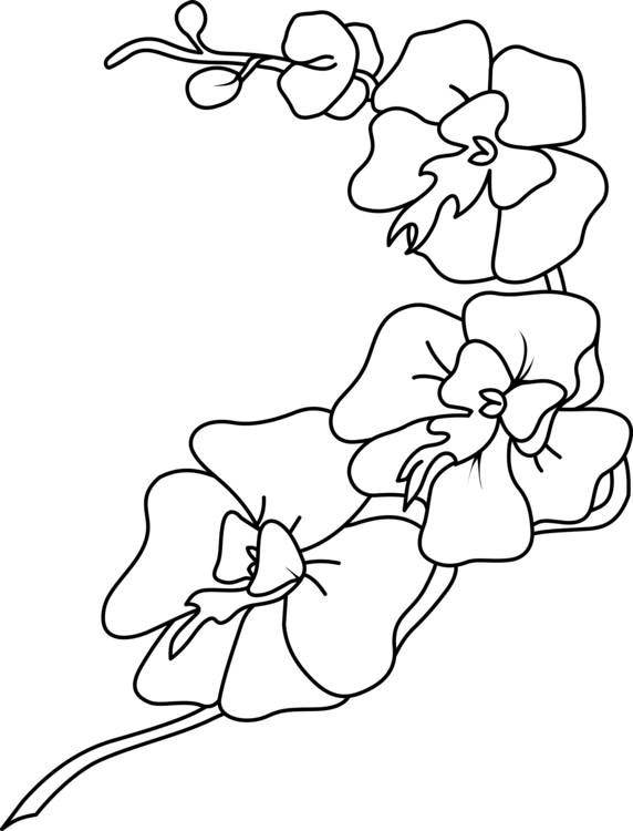 Growing flower clipart picture transparent Orchids Coloring book Drawing Orchid Growing Flower free commercial ... picture transparent