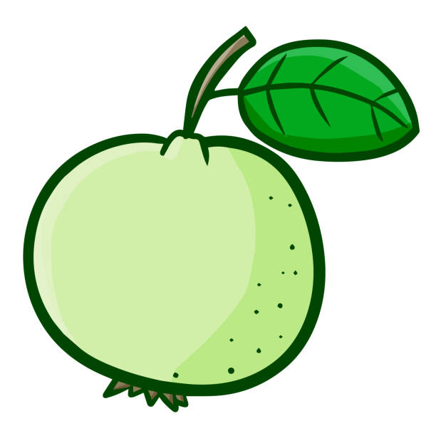 Guava images clipart royalty free download clipart guava – 2.000.000 Cool Cliparts, Stock Vector And Royalty ... royalty free download