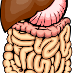 Gut clipart image library stock Gut Clipart | Free Download Clip Art | Free Clip Art | on Clipart ... image library stock