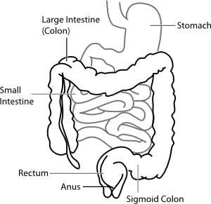 Gut clipart svg download Gut Clipart | Free Download Clip Art | Free Clip Art | on Clipart ... svg download