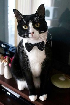 Guy in a tux with a weed eater clipart black clipart freeuse library 105 Best tuxedo cats one smart breed images in 2019 | Cats, Cats ... clipart freeuse library