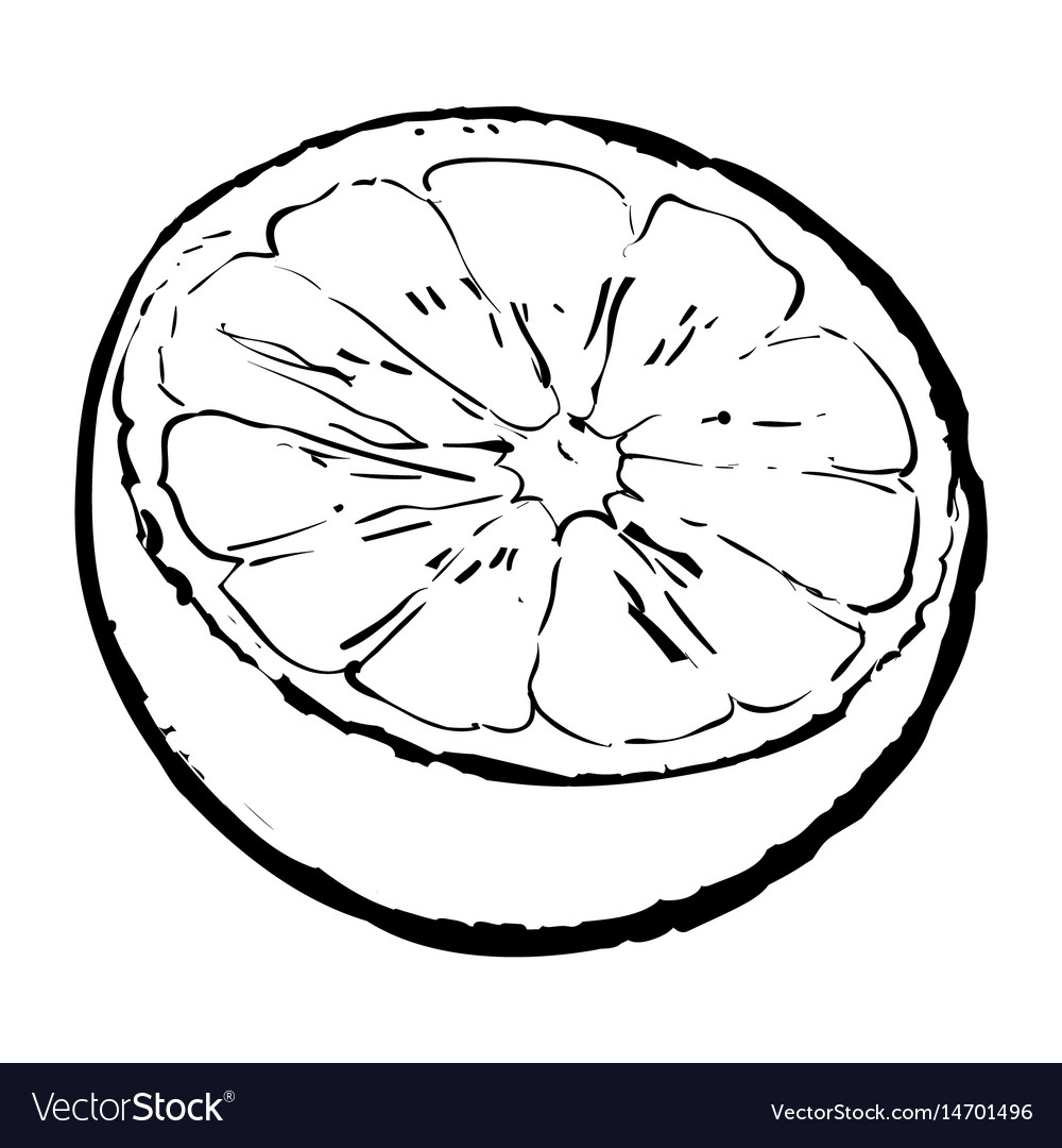 Half circle of hands black and white clipart graphic royalty free library Half of ripe lime sketch graphic royalty free library