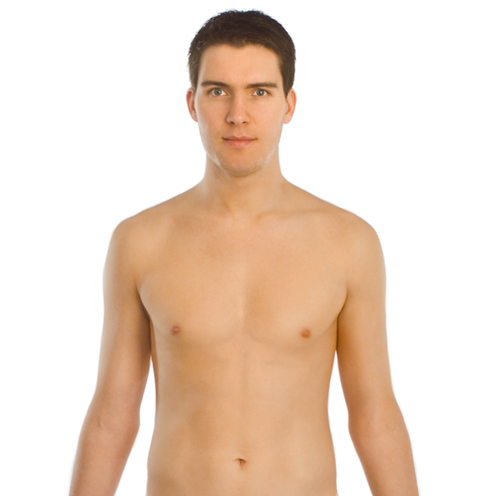 Half of a person s upper body clipart svg transparent Barechested,Male,Chest,Abdomen,Muscle,Skin,Neck,Trunk,Arm,Shoulder ... svg transparent