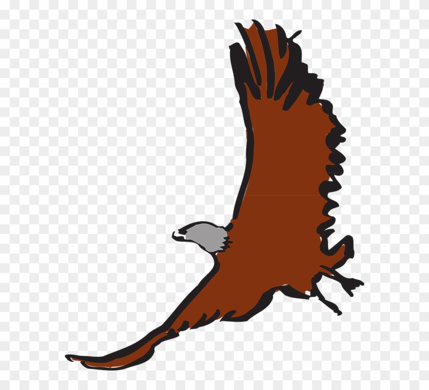 Halk clipart image free Free Hawk Clipart 12, Buy Clip Art - Clip Art - Png Download ... image free