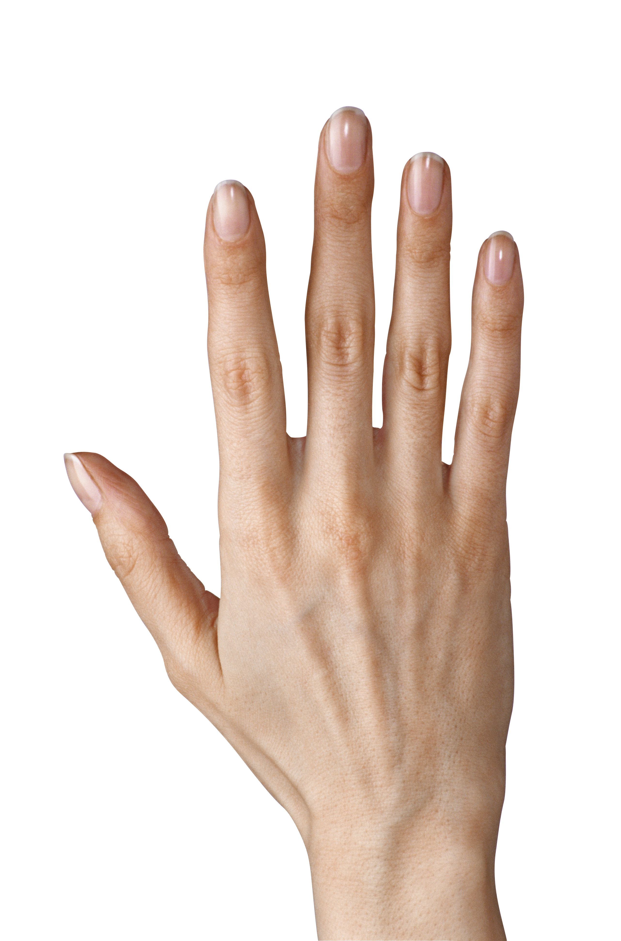 Hand clipart hd picture library stock Hand Showing Five Fingers PNG Clipart Image | Gallery Yopriceville ... picture library stock