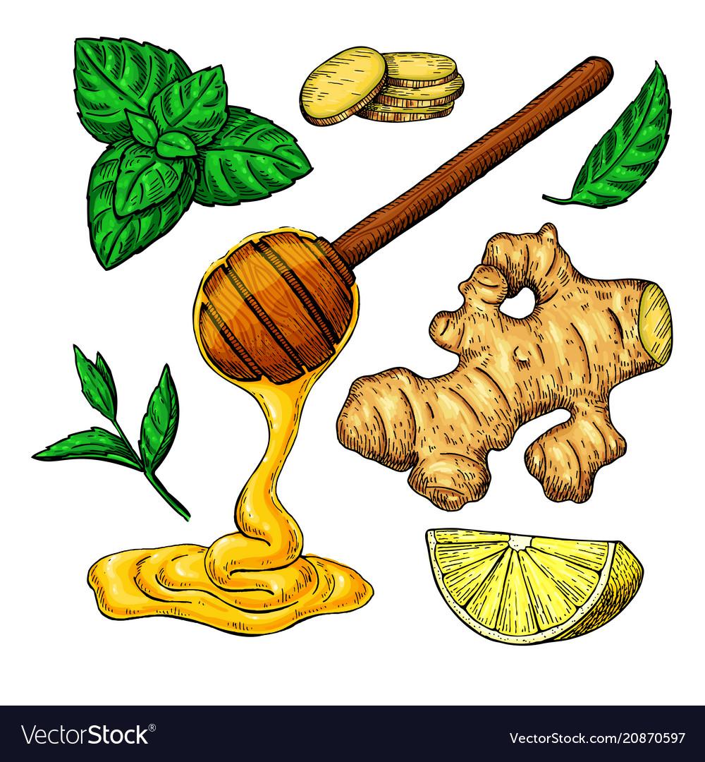 Hand drawn lemon peppermint clipart jpg black and white library Honey ginger lemon and mint drawing jpg black and white library
