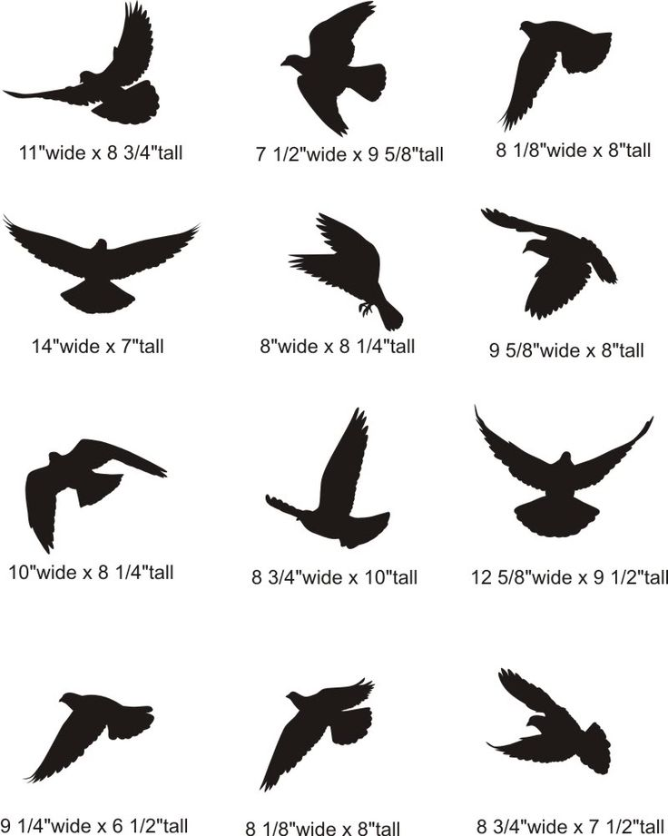 Hands 1 2 3 clipart silhouette png free stock 17 Best ideas about Bird Silhouette on Pinterest | Bird stencil ... png free stock