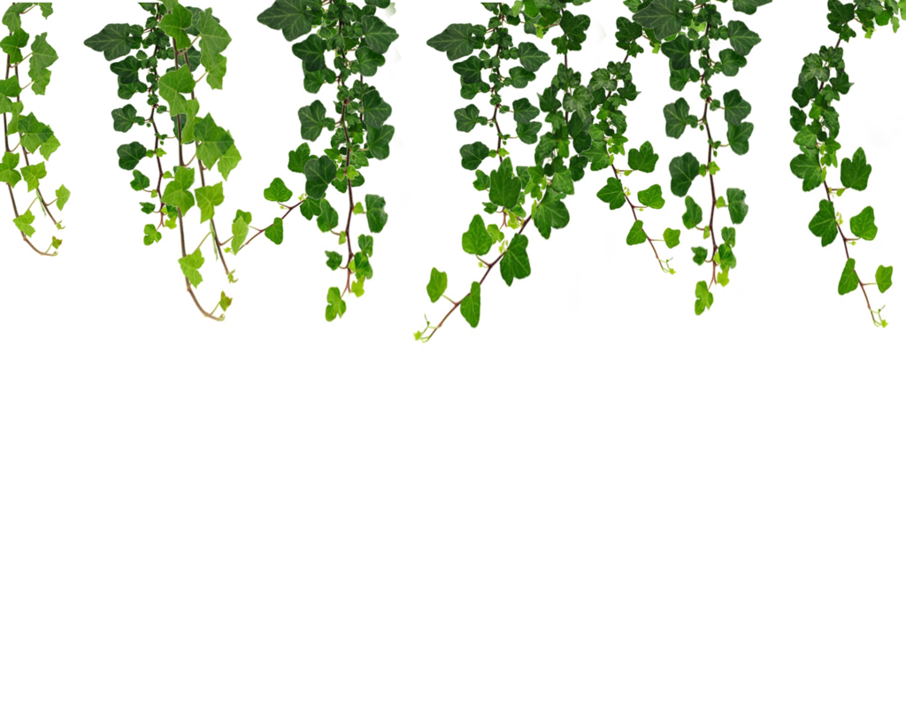 Tree vine clipart royalty free download 5848c7f85ccacf7bc0ee0123 royalty free download