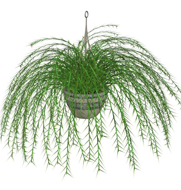 Hanging flower clipart clip Hanging Fern stock plant by madetobeunique on DeviantArt clip