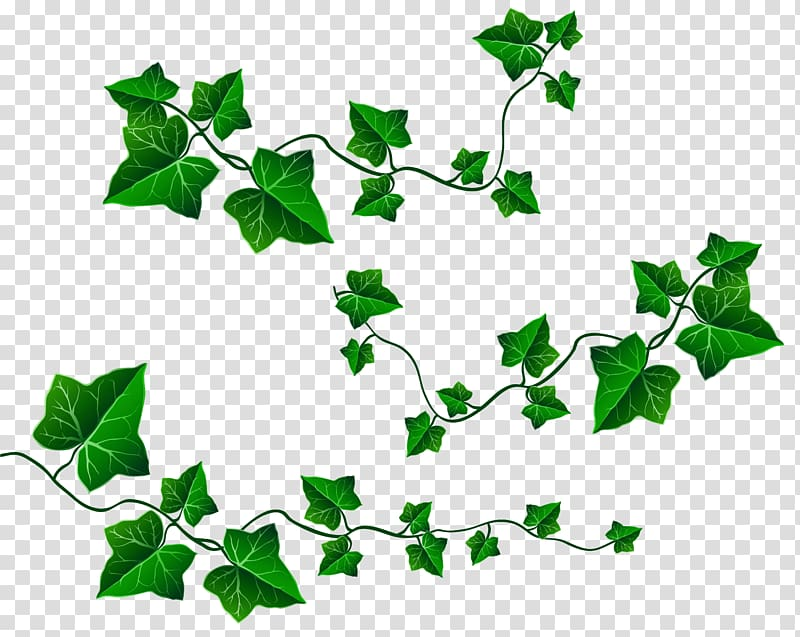 Hanging vines clipart svg library library Free download | Vine Ivy , Ivy Hanging Vines , green plants ... svg library library