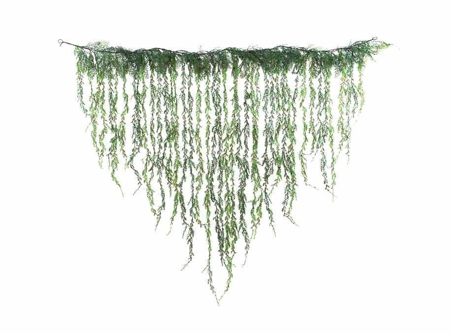 Hanging vines clipart png library download Jungle Vines Hanging , Png Download - Hanging Vines Png Free PNG ... png library download