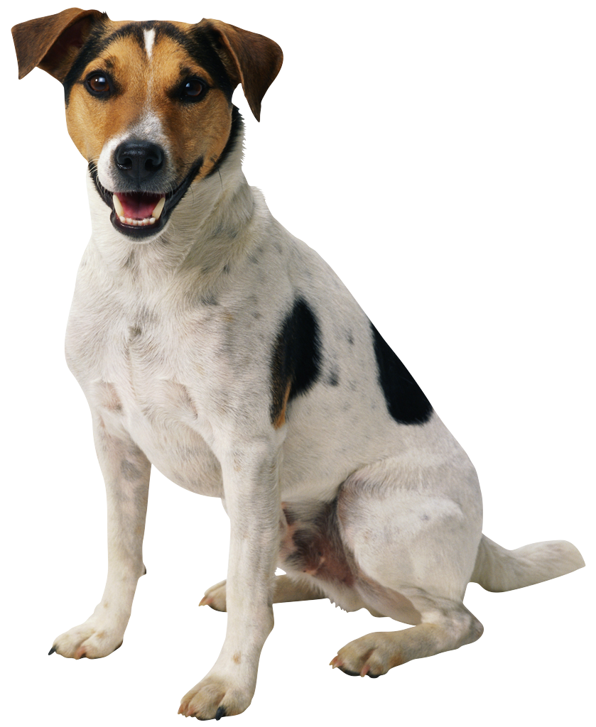 Happy dog clipart free picture transparent library Dog Png Happy Puppy picture transparent library