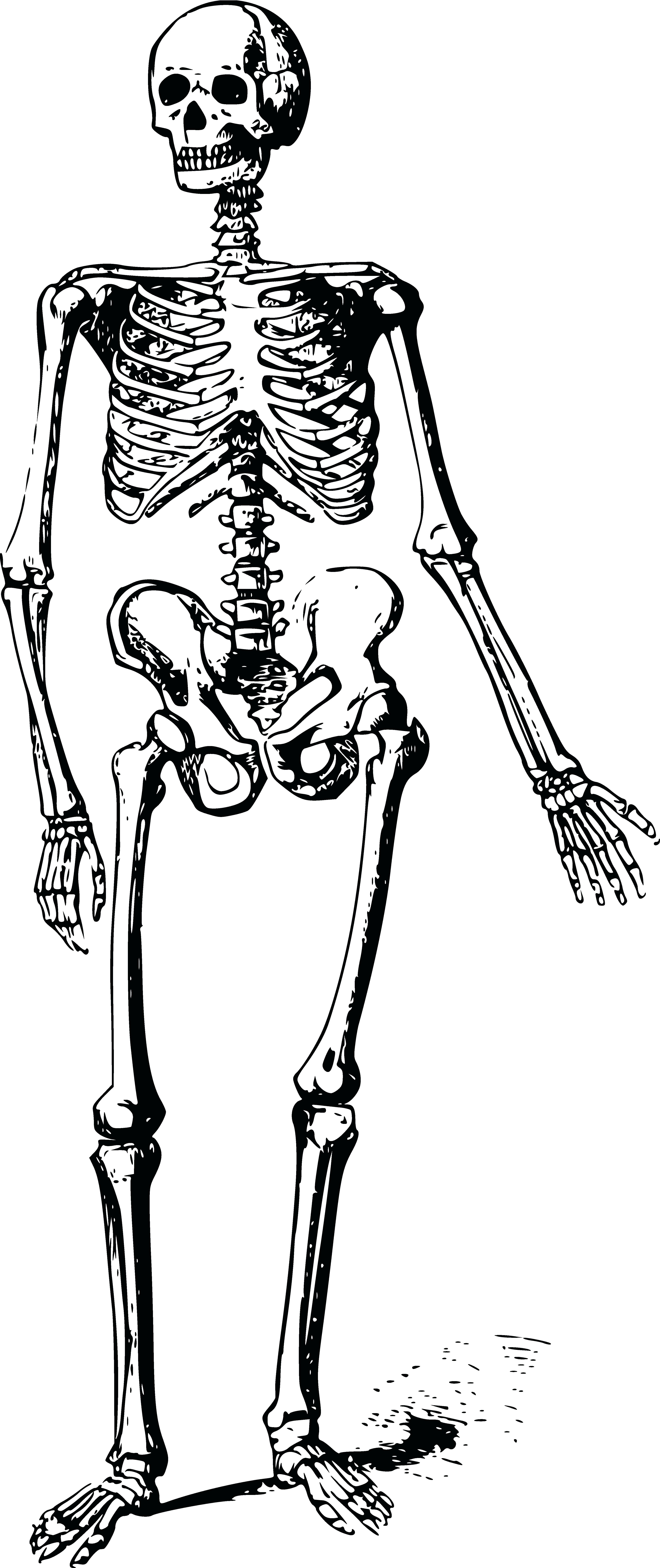 Happy skeleton clipart image stock Happy Skeleton Cliparts - Making-The-Web.com image stock