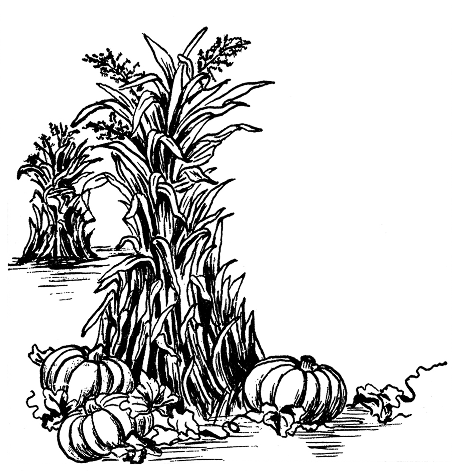 Harvest time border clipart black and white banner freeuse library Fall black and white fall harvest clip art black and white ... banner freeuse library
