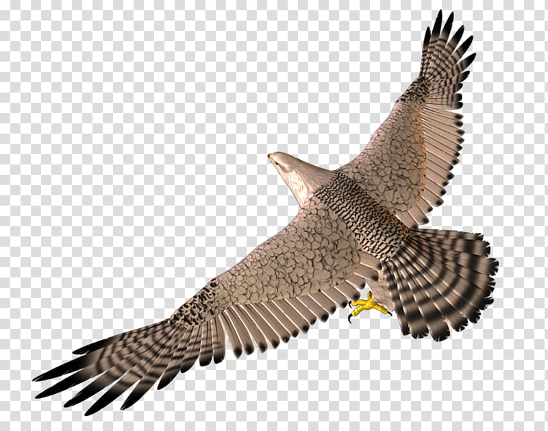 Hawk flying with wings up clipart transparent Bird Wing 3D computer graphics, 3D Flying Eagle transparent ... transparent