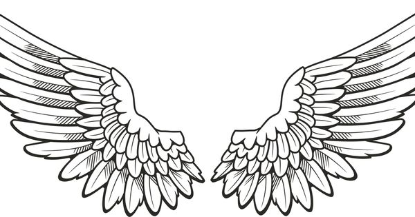 Hawk wing clipart vector transparent library Hawk Wings Drawing at PaintingValley.com | Explore collection of ... vector transparent library