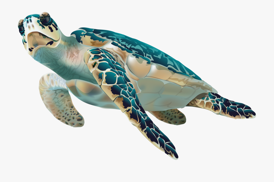 Hawksbill sea turtle clipart jpg royalty free download Sea Turtle Transparent Clip Art Image - Sea Turtle No Background ... jpg royalty free download