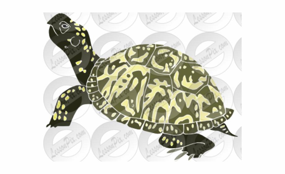 Hawksbill sea turtle clipart clip royalty free Hawksbill Sea Turtle {#970133} - Pngtube clip royalty free