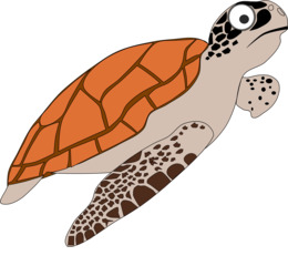Hawksbill sea turtle clipart clipart royalty free library Hawksbill Sea Turtle clipart - 53 Hawksbill Sea Turtle clip art clipart royalty free library