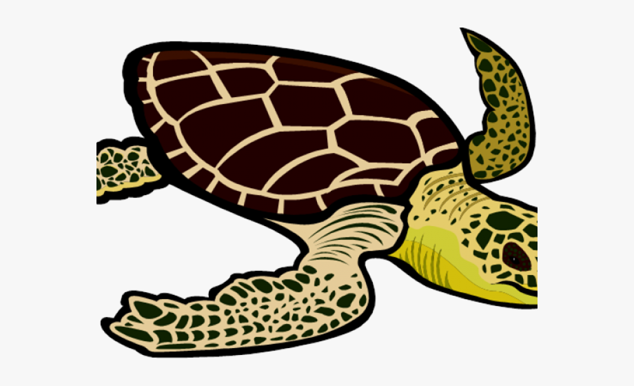 Hawksbill sea turtle clipart clipart freeuse Sea Life Clipart Pawikan - Green Sea Turtle Clipart, Cliparts ... clipart freeuse