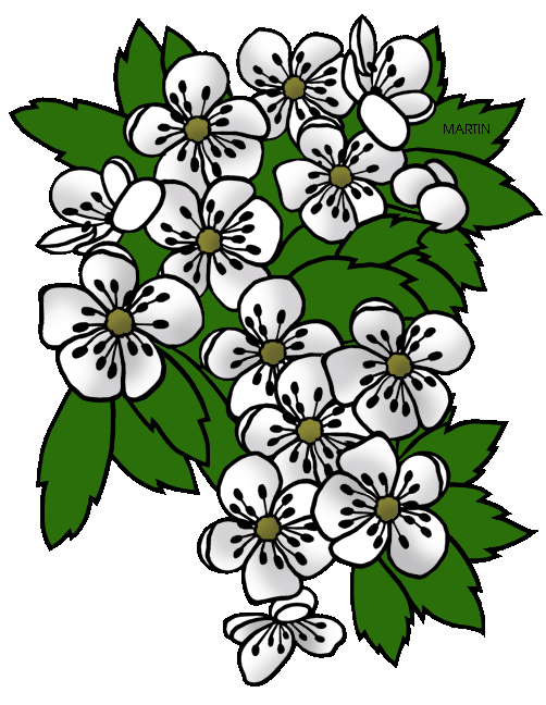 Hawthorn flower clipart clip library United States Clip Art by Phillip Martin, Missouri State Flower ... clip library
