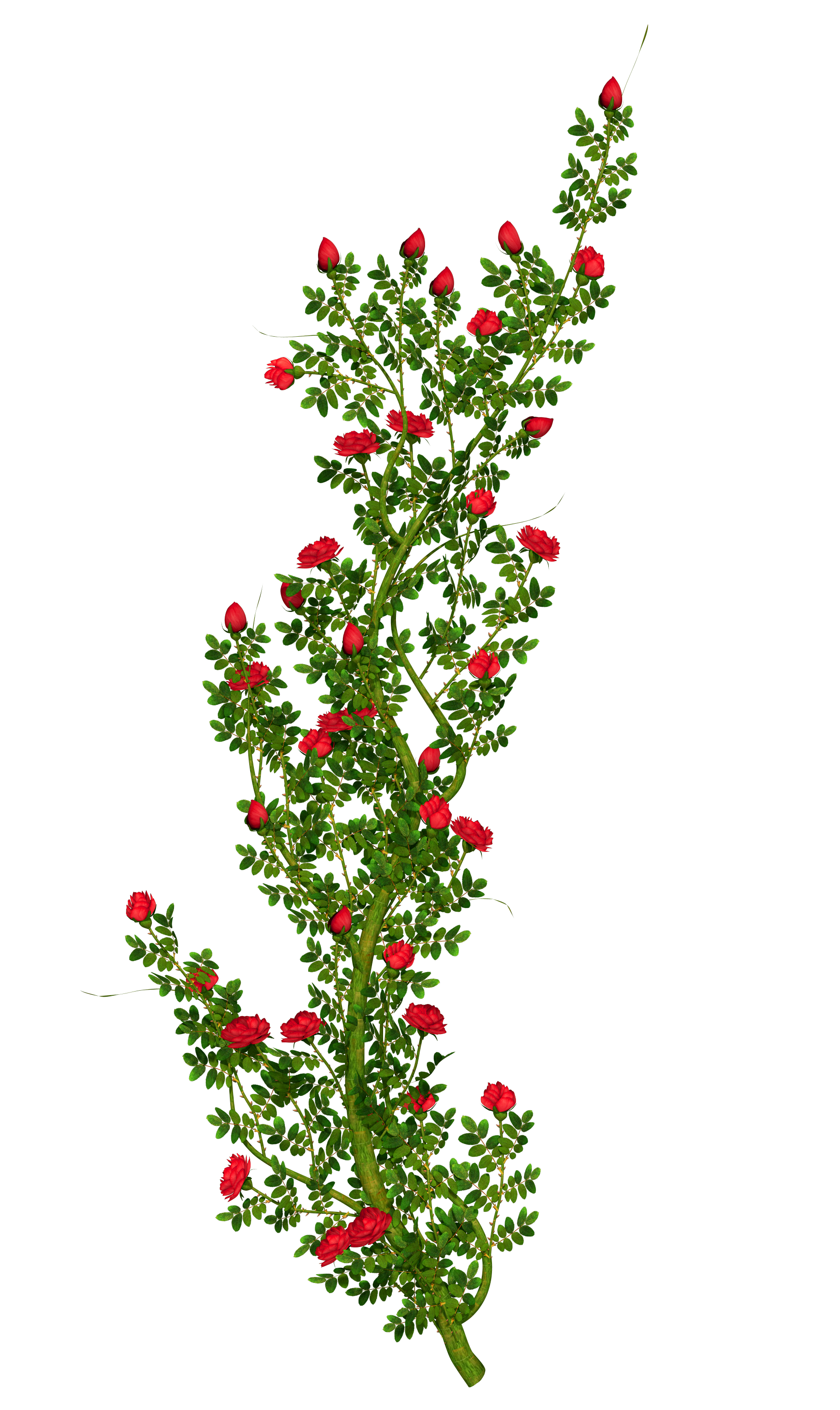 Hawthorn flower clipart clip art royalty free library Rosebush Clipart   Gallery Yopriceville - High-Quality Images and ... clip art royalty free library