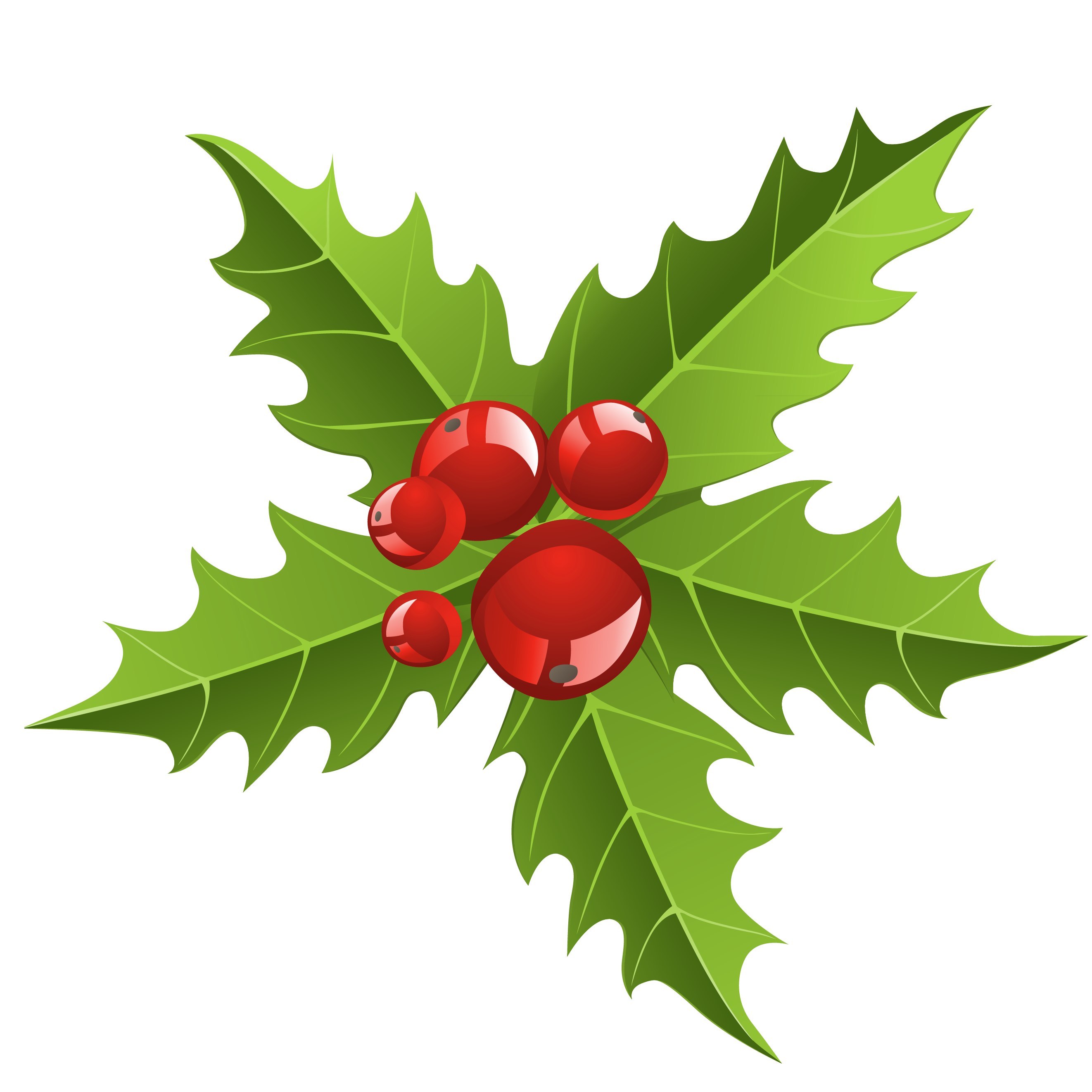 Hawthorn flower clipart picture download Chrismtmas Mistletoe Element PNG Picture   Gallery Yopriceville ... picture download