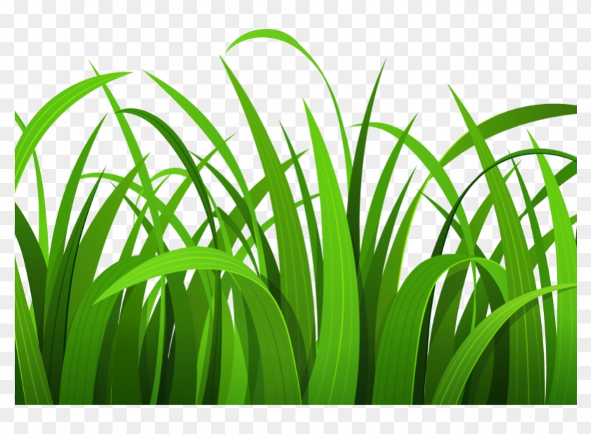 Hd grass clipart jpg freeuse download Ground Clipart Grass Flower - Grass Clipart, HD Png Download ... jpg freeuse download