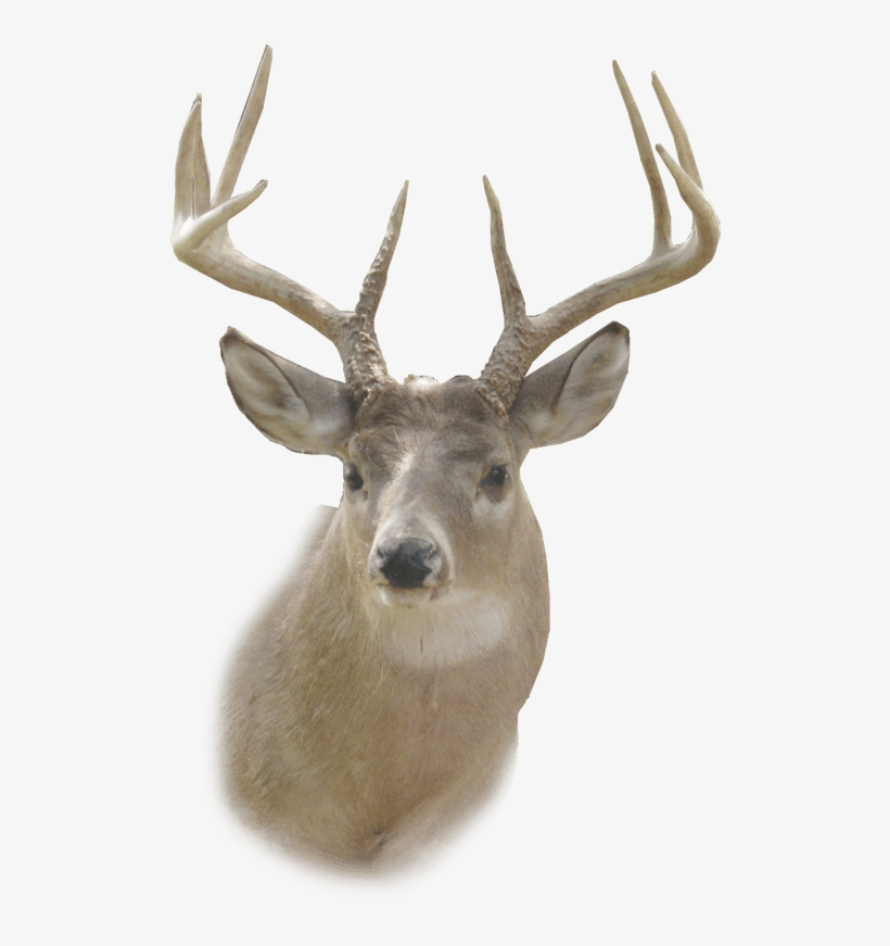Head and brain and deer hunting clipart graphic royalty free download Deer Png Images Transpa Free Pngmart Com - Deer Head Png Transparent ... graphic royalty free download