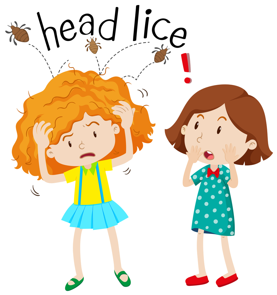 Head louse clipart png transparent Are Head Lice Contagious? - Lice Clinics of America png transparent