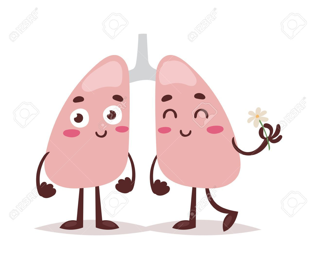 Healthy lungs clipart transparent Clean healthy lungs vector illustration. » Clipart Portal transparent
