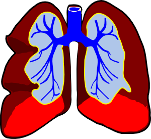 Healthy lungs clipart png black and white Healthy Lungs Clip Art at Clker.com - vector clip art online ... png black and white