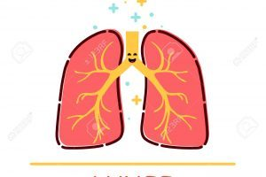 Healthy lungs clipart banner Healthy lungs clipart 6 » Clipart Portal banner