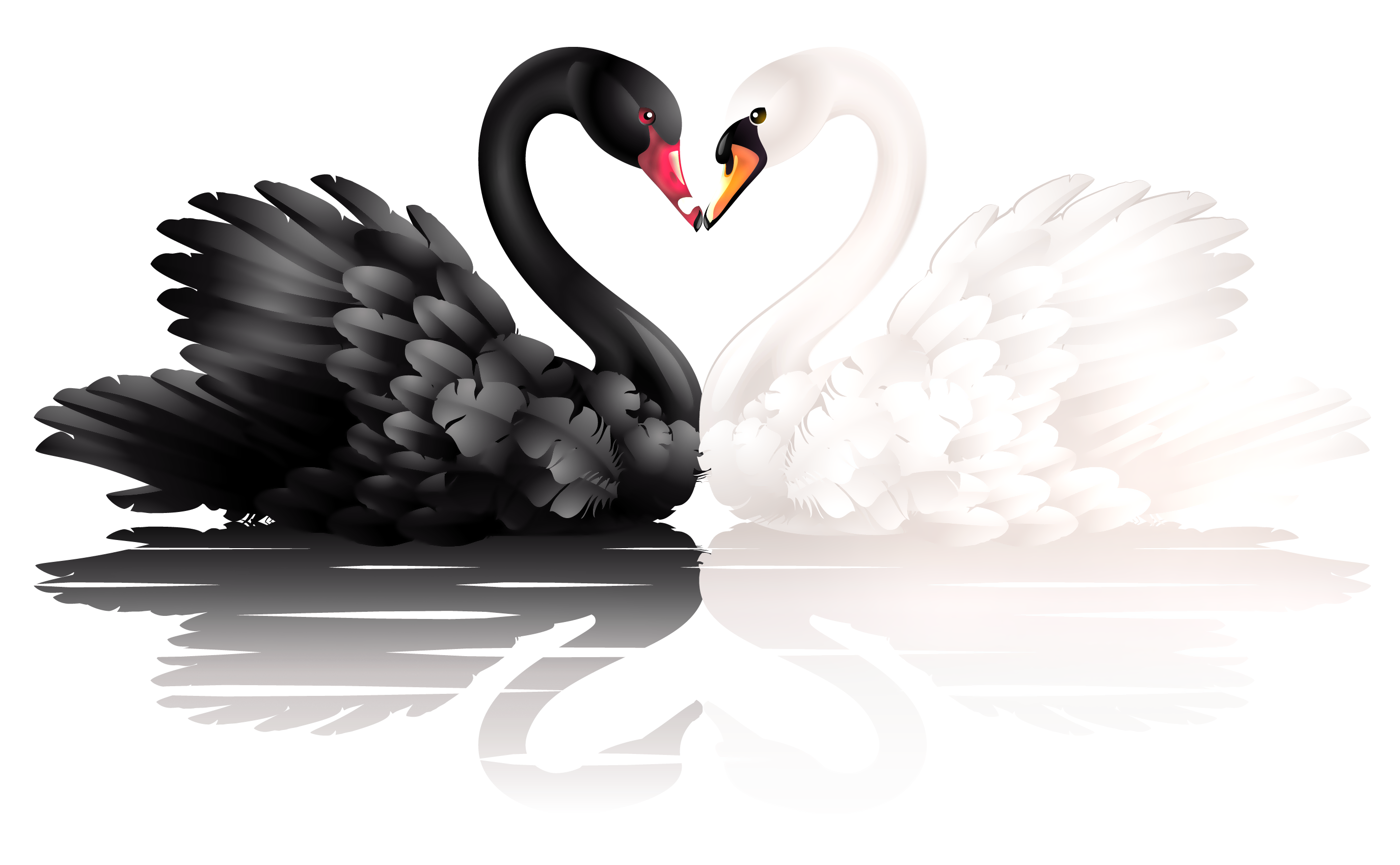 Heart and bird clipart banner library library White and Black Swans with Heart Shape PNG Clipart | Gallery ... banner library library