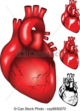Heart artwork clipart stock Vector Clipart of heart - Vector illustration of human heart mesh ... stock