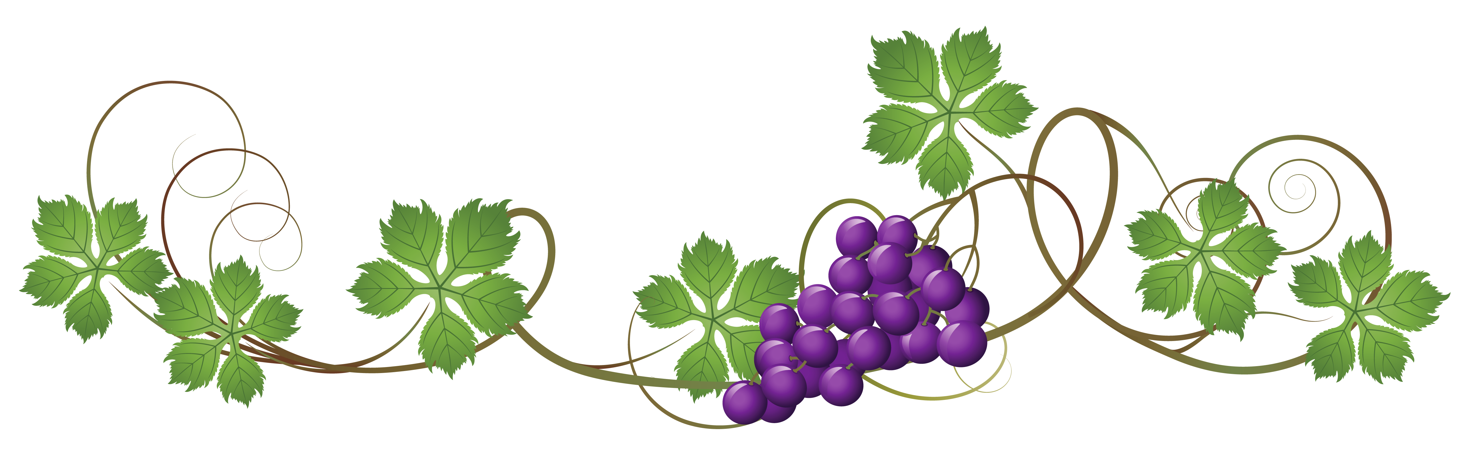 Purple flower vine clipart clipart black and white download 28+ Collection of Grape Vines Clipart | High quality, free cliparts ... clipart black and white download
