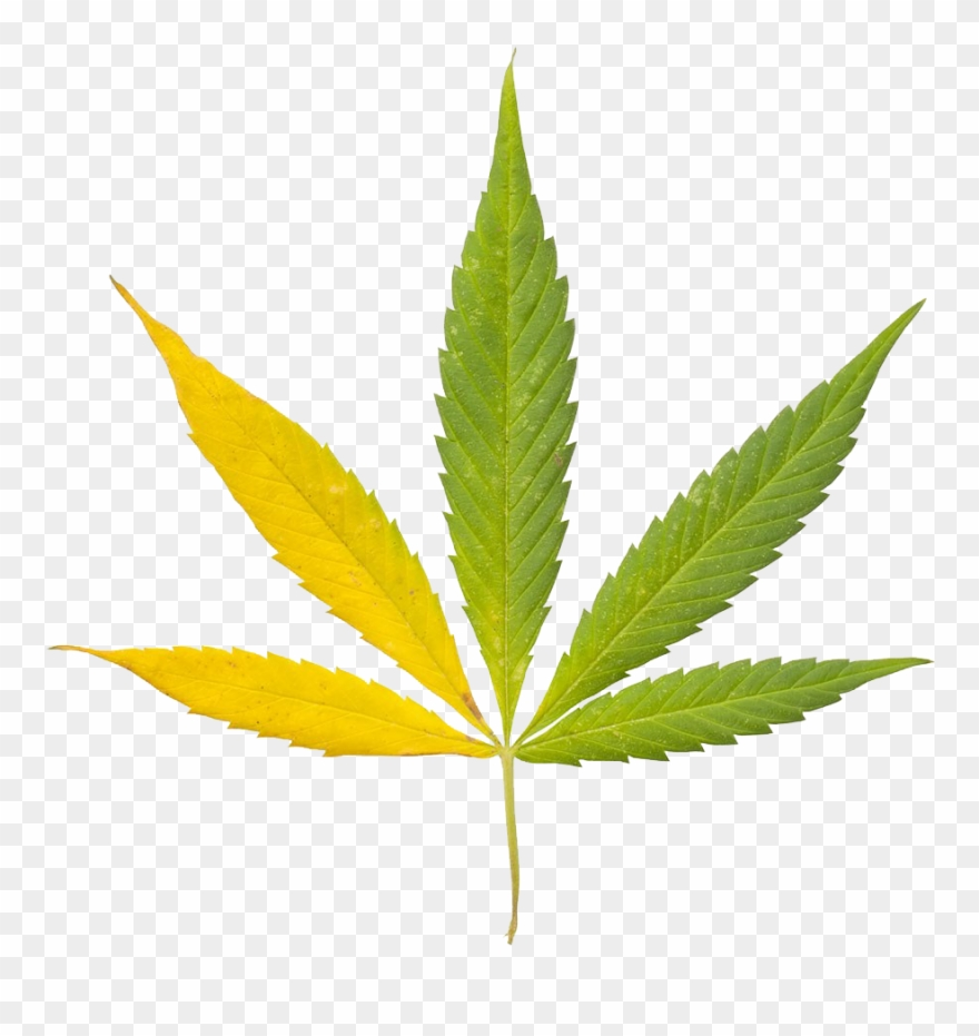 Hemp leaf clipart banner royalty free Cannabis Sativa Leaf Bong Clip Art Indian - Keep Blazing Stay ... banner royalty free