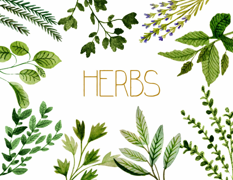Herb garden clipart