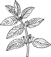 Herbs clipart black and white picture library library Free Herbs & Spices Clipart - Clip Art Pictures - Graphics ... picture library library