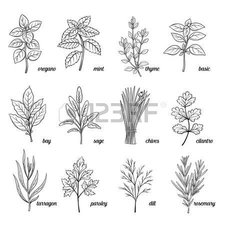 Herbs clipart black and white picture library stock Image result for free vintage black and white clip art mint leaves ... picture library stock