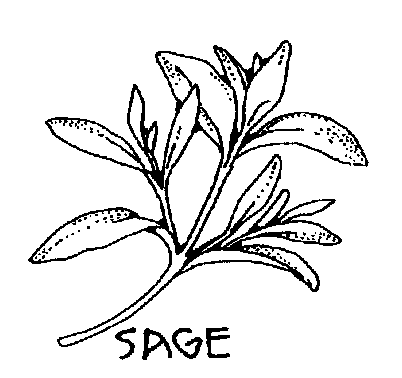 Herbs clipart black and white graphic Sage Bw Clipart | free clipart sequel | Sage plant, Herb art, Herb ... graphic