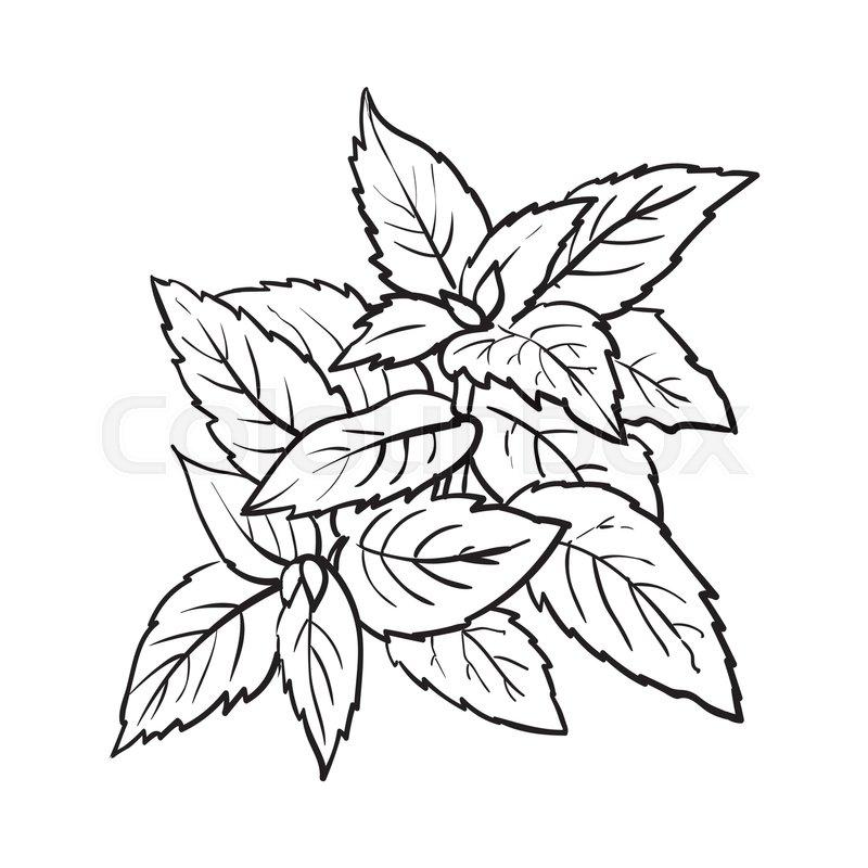 Herbs clipart black and white clip royalty free Collection of Herbs clipart | Free download best Herbs clipart on ... clip royalty free